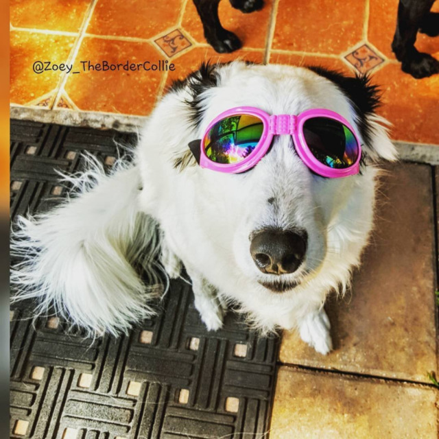 goggles for dogs lentes o gafas para perros