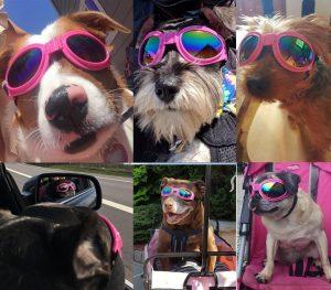 goggles for dogs, lentes o gafas para perros