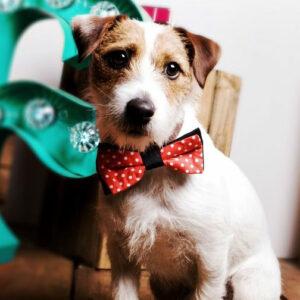 Corbata para Mascotas