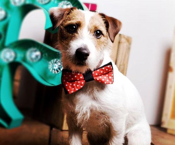 corbata lazo pajarita para mascota