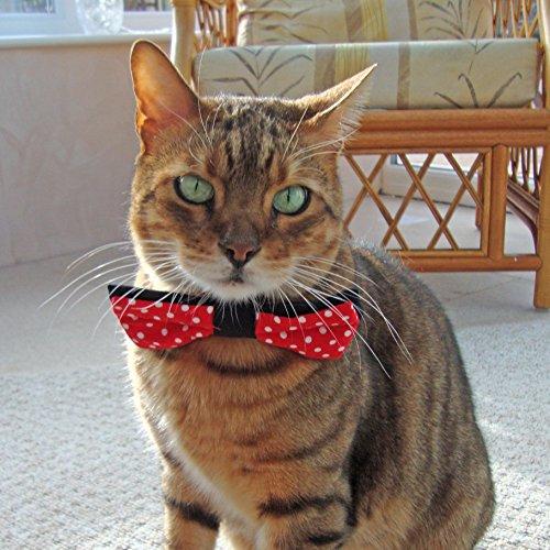 corbata lazo moño para gato