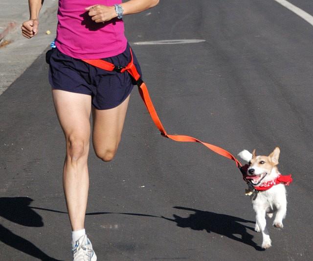 correa manos libres para perro