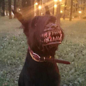Bozal para perros que da miedo
