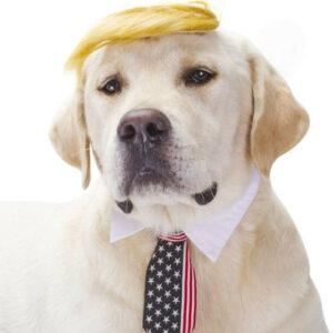 Disfraz de Donald Trump para mascotas
