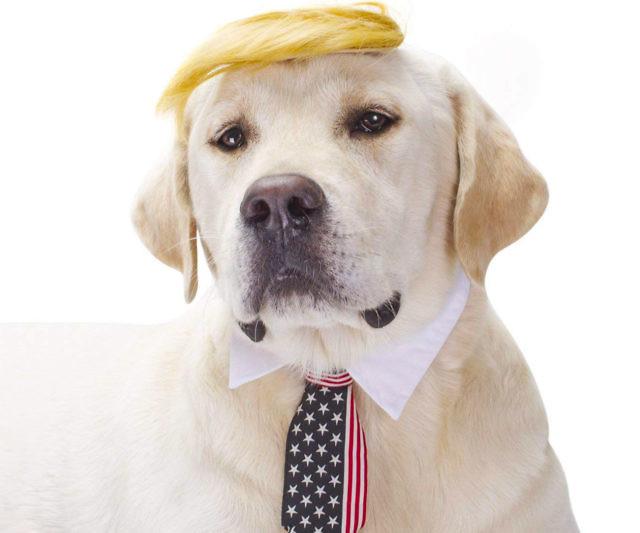 disfras para perro de donald trump